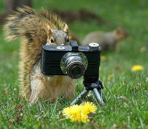 fotografingsquirrel.jpg